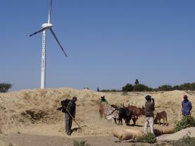 Ancient harvesting methods co-exist with modern sustain­able energy technologies in Ethiopia. In the harvesting season, oxen tread grain ­beneath the wind turbines. Photo: Bollinger-Kanne